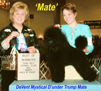 'Mate'.....CH. DeVent Mystical D'undr Trump Mate..... new owners Betty & Frank Lindsay
