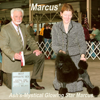 'Marcus'......CH. Ash's-Mystical Glowing Star Marcus