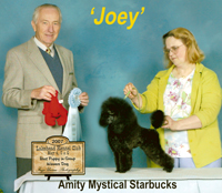 'Joey' ... Can.CH.  Amity Mystical Starbucks..... ***Kayla Rigney-owner***