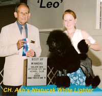 'Leo'... CH. Ash's-Mystical White Lighter