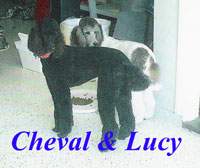 Cheval & Lucy