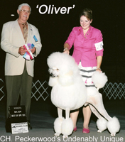 'Oliver'..... CH. Peckerwood's Undenably Unique     .... owned by Tom Carneal