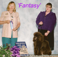 'Fantasy' ... Am./Can CH. Ash's-Mystical Amity Fanstay   ..