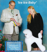 **** NEW Canadian CHampion **** 'Ice Ice Baby' ....   Ash's-Mystical Dakota Ice Ice Baby    ... owned by Christine Becker
