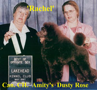 Rachel. Can. CH. Amity's Dusty Rose.