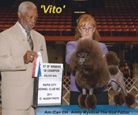 'Vito' ... Am/Can CH. Amity Mystical The God Father