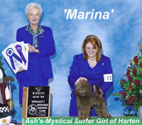 'Marina' ....CH.  Ash's-Mystical Surfer Girl Of Harten