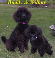 Buddy and Wilbur