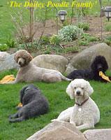 The Dailey Poodle Family