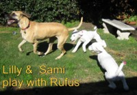 Lilly & Sami play with Rufus
