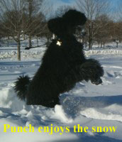 'Punch' enjoys the blizzard 2005