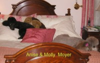 Anise & Molly Moyer