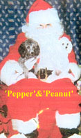 Pepper and Peanut