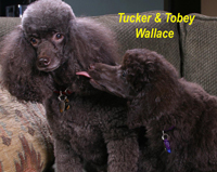 Tucker & Tobey Wallace