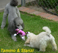 Tamino & Stanzi playing