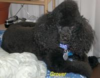 Grover with his Mohawk