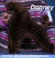 'Donney' ... Am./Can. CH. Amity's Donneybrooke