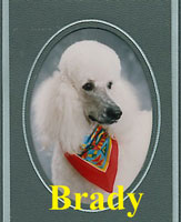 Brady owned by Suzanne McVey