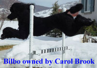 Bilbo owned by Carol Brook