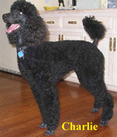 Charlie owned by Susan Carlson