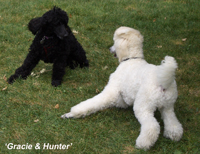 'Hunter & Gracie'