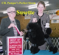 CH. Pamper's Perfect Storm   'Susette'