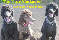 The Three Muskateers owned by Alicia Wallis