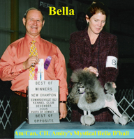 'Bella' ... Am/Can. CH. Amity's Mystical Bella D'Ball
