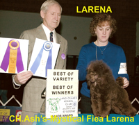 'Larena'  CH. Ash's-Mystical Fiea Larena  ... owned by Cathy Carruthers