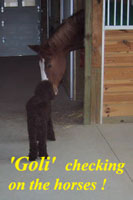 Goli checking on the horses!