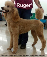 """RUGER' .. UKC CH. Ash's-Mystical Mithril Ruger Red Label"