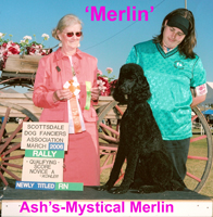 'Ash's-Mystical Merlin II' , Cgc, RN  ,RA, NJP, NAP (owned by Shannon Reynolds & Pat Cavis)