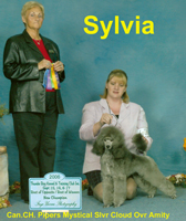 'Sylvia' Can. CH. Pipers Mystical Slvr Cloud Ovr Amity